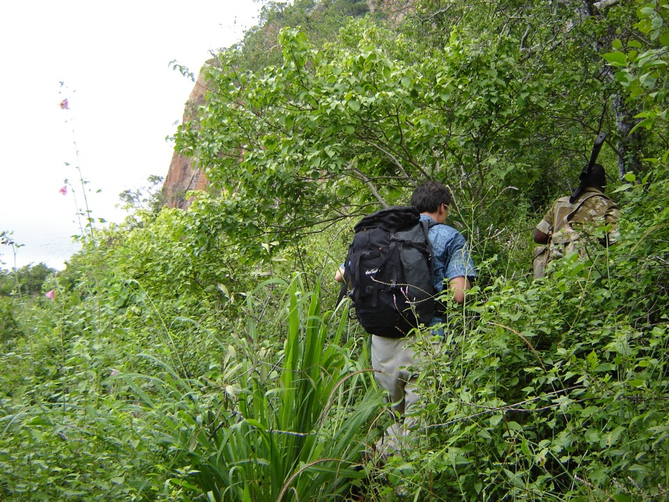 Thick jungle on the approach